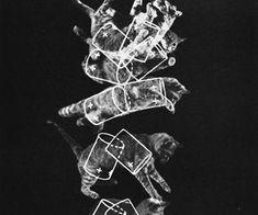 "The ""falling cat"" phenomenon that helped NASA prepare astronauts for zero gravity, 1969 - Rare Historical Photos Apollo Space Program, Cat Light, Rare Historical Photos, Astronauts In Space, Life Pictures, Picture Collection, Nasa, Zero, Amazing"