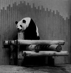 Black and white::Chloe-laeo