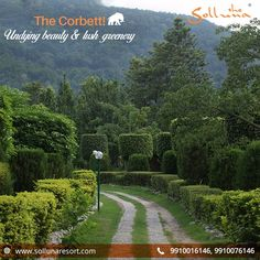 The #Corbett sets around vibrant vibes of calmness & utter bliss displaying an aura of fine beauty. Come & experience the magic yourself! For reservations visit: www.sollunaresort.com Call on +91 9910016146  Use coupon code - DETOX2017  #sollunaresort #resortsincorbett #luxuryresortsincorbett  #JimCorbett #calmness #aura #beauty