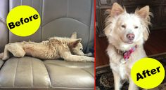 36 Rescue Dog Transformations That Will Restore Your Faith In Humanity