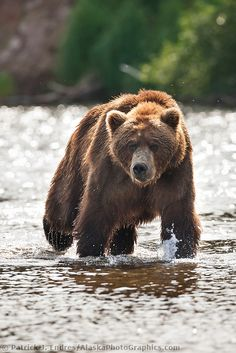 Cute Wild Animals, Large Animals, Animals And Pets, Bear Pictures, Cute Animal Pictures, Ours Grizzly, Wild Animals Photography, Zoo Photos, Beast Creature