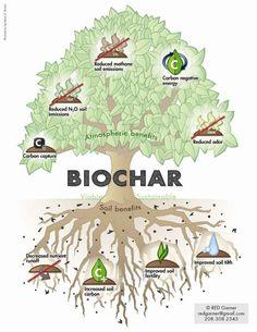 International Biochar Iniciative