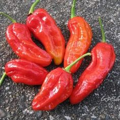Men/'s Ladies T SHIRT cool food CHILI PEPPER heat scale hot mexican thai indian