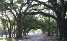 Cadillac Square is a beautiful park, rich in local history. The live oak trees throughout this historic site are all that remains of the home of Governor Cadillac and the capital of the Louisiana Territory. This park is used for festivals, birding, and large school groups.