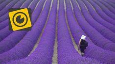 I colori della #Provenza: campi di #lavanda, #girasoli, borghi medievali