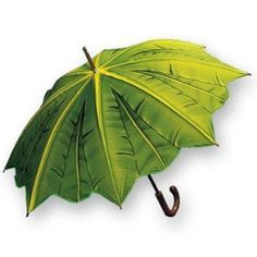 Amazon.com: Salamander Graphix - Adult Green Palm Leaf Stick Umbrella: Clothing