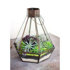 Botanist's Lamp
