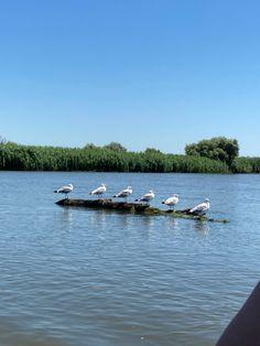 Birds in Danube Delta Danube Delta, Romania, Boat, Travel, Dinghy, Viajes, Boats, Destinations, Traveling