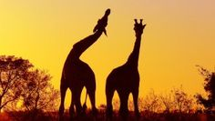Five of the Best Animal Experiences in Africa