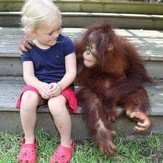 "Monkey / Girl Friendship ""So, tell me again.WHY do they call them 'monkey bars'? Zoo Animals, Animals For Kids, Cute Animals, Cute Friends, Best Friends, Friends Family, Stuffed Animals, Cute Kids, Cute Babies"