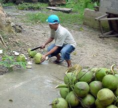Photos of the Philippines Southeast Asia, Sprouts, Philippines, Vegetables, Photos, Travel, Pictures, Viajes, Vegetable Recipes