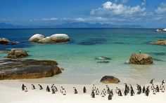 "Boulder Beach in South Africa. I still laugh at the ""Look under your cars for pinguins"" sing at the parking lot. South Africa Beach, South Africa Tours, Cape Town South Africa, Port Elizabeth, Places To See, Places To Travel, Travel Destinations, Magic Places, Boulder Beach"