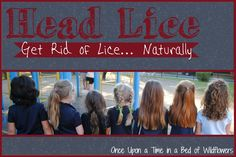 Get rid of lice, naturally, and without harmful chemical treatments via Once Upon a Time in a Bed of Wildflowers
