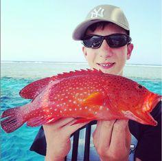 strawberry #grouper