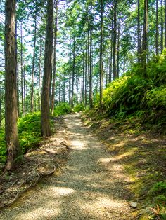 Step back in time and trek along ancient pilgrimage trails in the footsteps of the Japanese emperors. Visit Japan, Back In Time, Pilgrimage, Kyoto, Trekking, Trail, Country Roads, Tours, Japanese