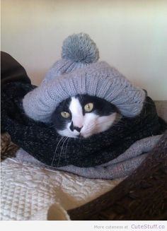 cat_ready_for_winter