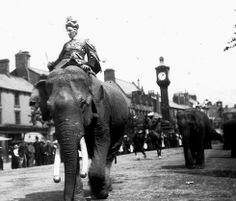 Sanger's Circus Procession Main Street Cockermouth Famous Stars, Vintage Circus, Time Capsule, Cumbria, British History, Abandoned Houses, Main Street, Storyboard, Elephant