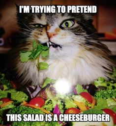 LOLcats is the best place to find and submit funny cat memes and other silly cat materials to share with the world. We find the funny cats that make you LOL so that you don't have to. Funny Cats And Dogs, Funny Animals, Cute Animals, Animal Funnies, Funny Kitties, Funny Horses, Adorable Kittens, Animal Quotes, Kitty Cats