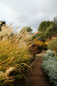 how to get rid of rust on ornamental grass