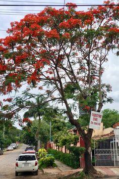 Chivato.Paraguay