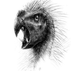 Imágenes de la Ciencia y de la Naturaleza: Pegomastaxafricanus
