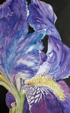 Watercolor painting by Nancy Newman Iris In Focus