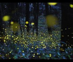 This nighttime scene is actually a picture of fireflies taken with a long exposure setting. What cool new idea will you come up with? Find more great nighttime inspirations on our Pinterest board: http://pinterest.com/artbeads/night-inspirations/