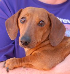 Carolyn and her 7 babies need a nurturing foster home, please... http://nevadaspca.blogspot.com/2014/05/carolyn-and-her-7-babies-need-nurturing.html