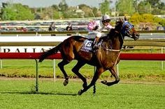 Might and Power was rated the world's best stayer when in 1997 as a four-year-old he won the Caulfield Cup and Melbourne Cup double. Might and Power (foaled 1993) is a New Zealand bred, Australian owned and trained Thoroughbred racehorse who was named Australian Horse of the Year in 1998 and 1999.