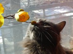 Cat kissing flower