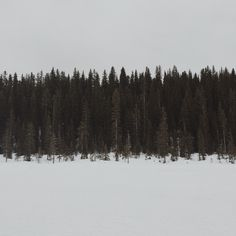 Minimal Photography, Nature Photography, Travel Photography, Street Trash, Wolf, Outdoor Camping, Nature Pictures, Animals Beautiful, Adventure Time