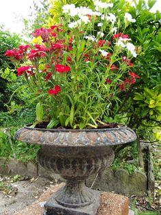40 inspirations pour un jardin anglais Garden Yard Ideas, Garden Planters, Garden Art, Garden Landscaping, Home And Garden, Garden Landscape Design, Shade Garden, Garden Planning, Garden Inspiration