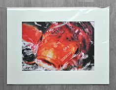 SIGNED LIMITED EDITION Coloured Pencil Giclee print Koi Carp