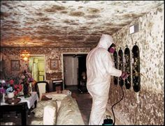 Learn how to remove MOLD quickly.