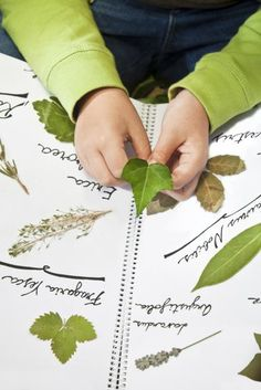 Children hands and herbarium. - Carmen Martínez Banús/E+/Getty Images