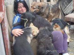 Fazekas Ildikó Ózdon és annak környékén menti a kidobott, megunt, bántalmazott kutyákat. Mindezt önkéntes alapon teszi,gyakorlatilag a nap 24 órájában. Emellett erején felül próbál egy menhelyet felépíteni, amivel nagyon apró léptekben tud csak haladni, mert támogatást gyakorlatilag sehonnan nem kap. Csupán az állatszerető és őt tisztelő civilek segítségére számíthat. Az épülő menhelyen jelenleg több mint 200 kutyus él,ezeknek a napi élelmezése sem kis feladat, nem beszélve a többi…