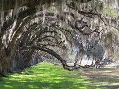 """Down in South Carolina's Lowcountry is Beaufort, a town locals liken to a """"modest millionaire who never puts on airs."""""""