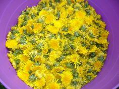 BABSKÉ RADY A TIPY PAMPELIŠKOVÝ MED  365 kvítků pampelišek  2 litry vody 2 celé omyté chemicky neošetřené citróny 2 kg pískového cukru