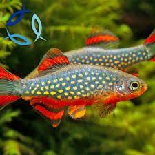 Buy Tropical fish, Marine fish and Koi Carp Online- Aquatics to your Door Grass Carp, Neon Tetra, Malawi Cichlids, Shrimp And Lobster, Floating Plants, Nano Tank, Fish For Sale, Koi Carp, Marine Fish