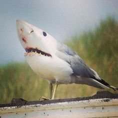 SHARKBIRD!!!!!! RUN!!!!!!!!!!!!!!!!!!!!!!!!!!!!
