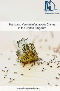 Pests and Vermin Infestations The Tenant, Rental Property, Home Repair, Being A Landlord, Food Preparation, Health, United Kingdom, Health Care, England