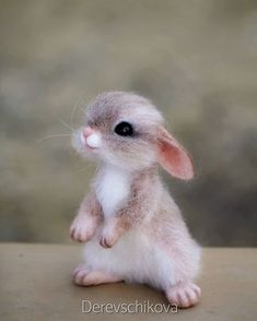 Log in - rabbit pictures . Cute Animals Images, Cute Wild Animals, Baby Animals Pictures, Cute Stuffed Animals, Cute Animal Photos, Cute Funny Animals, Animals Beautiful, Cute Cats, Cute Baby Dogs