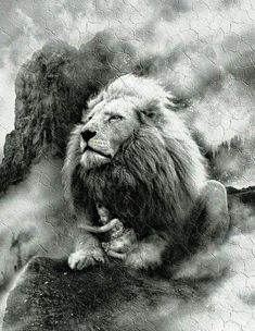 Lion Images, Lion Pictures, Jesus Pictures, Beautiful Cats, Animals Beautiful, Lion Of Judah Jesus, Lion Tattoo Sleeves, Lion Photography, Lion Love