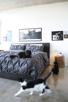 """We get comments in response to our posts all the time that follow the lines of, """"I can't do that in my house. Because cat(s)."""" As a total dog person, I admit I'm clueless, but there are a few things I've learned about living with furry felines over the years. This is all good decorating advice, straight from the mouths of smart readers."""