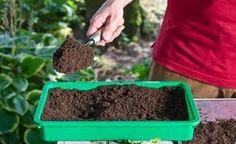 Anzuchterde, auch Aussaaterde genannt, bietet Samen und Stecklingen optimale Keim- und Wachstumsbedingungen. Wir zeigen Ihnen, wie Sie das Substrat ganz leicht selber machen können.
