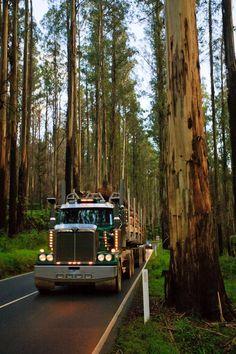 Trucking through the forest in a Western Star. Big Rig Trucks, Semi Trucks, Cool Trucks, Truck Driving Jobs, Semi Trailer Truck, Western Star Trucks, Picture Tree, Classic Car Restoration, Diesel Trucks