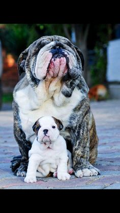 Proud Dog