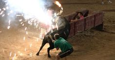 Detengan festejos donde se utilizan y maltratan animales FIRMA Y COMPARTE ESTA PETICIÓN AHORA!