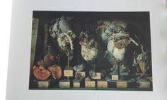 Livre photographique de Dominique Laugé, accompagné d'un poème de Maya de Chanterac. L'artiste a photographié les réserves des musées d'histoire naturelle de Gaillac, d'Alexandrie et de Turin. Dominique, Turin, Maya, Painting, Natural History Museum, Alexandria, Artist, Photography, Painting Art