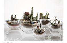 Terrario em um pote de vidro